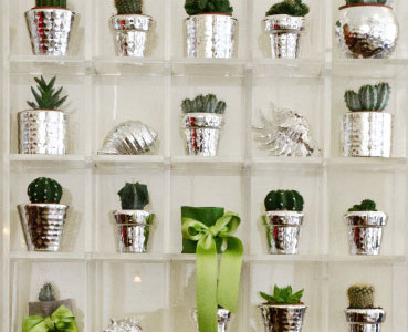 Jars with silver succulent plants.